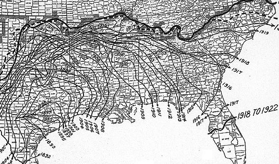 The spread of the boll weevil, early 1900s